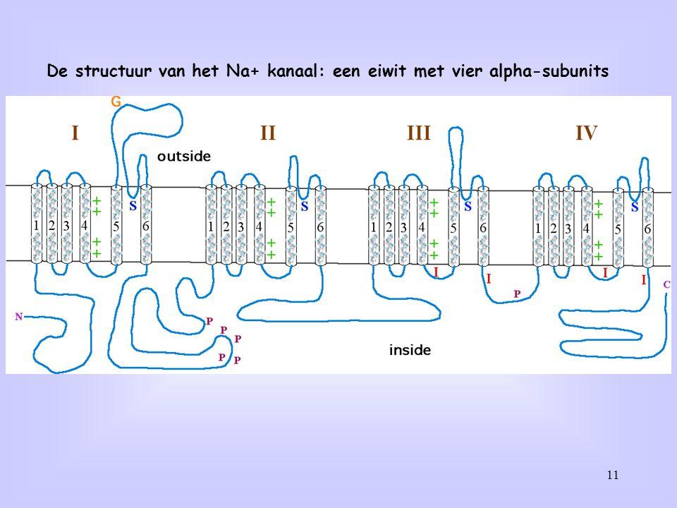 11 De structuur van het Na+ kanaal: een eiwit met vier alpha-subunits
