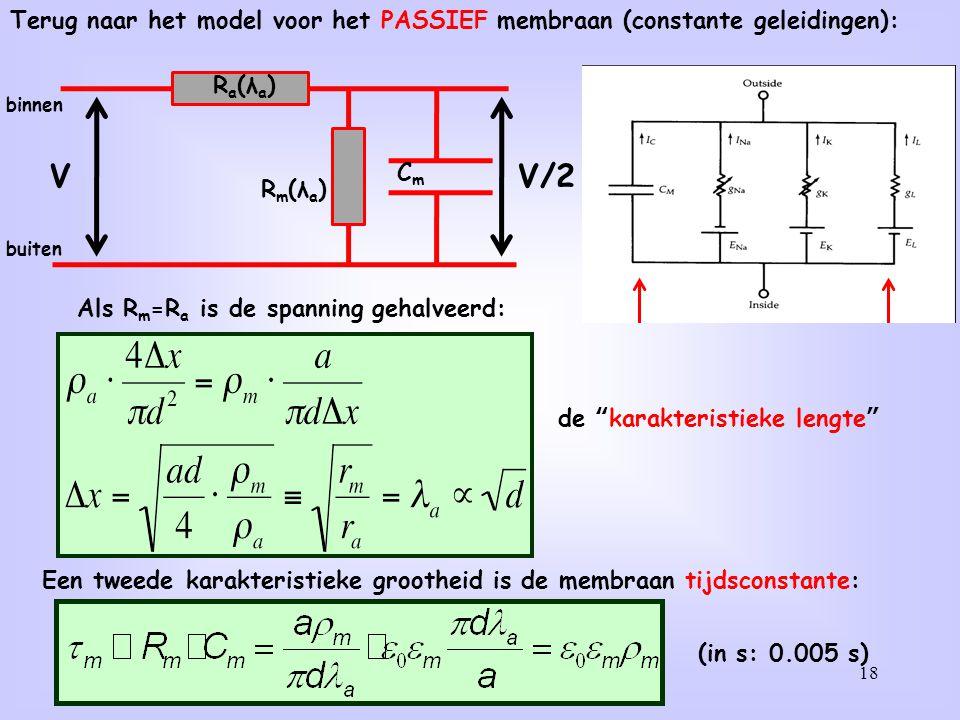 18 CmCm R m (λ a ) R a (λ a ) binnen buiten Als R m =R a is de spanning gehalveerd: de karakteristieke lengte VV/2 Een tweede karakteristieke grootheid is de membraan tijdsconstante: (in s: 0.005 s) Terug naar het model voor het PASSIEF membraan (constante geleidingen):