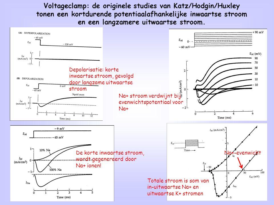 5 Voltageclamp: de originele studies van Katz/Hodgin/Huxley tonen een kortdurende potentiaalafhankelijke inwaartse stroom en een langzamere uitwaartse