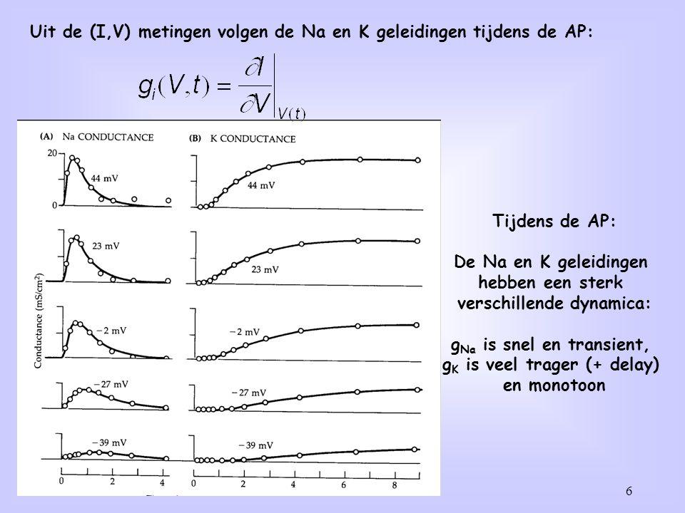 6 Tijdens de AP: De Na en K geleidingen hebben een sterk verschillende dynamica: g Na is snel en transient, g K is veel trager (+ delay) en monotoon Uit de (I,V) metingen volgen de Na en K geleidingen tijdens de AP: