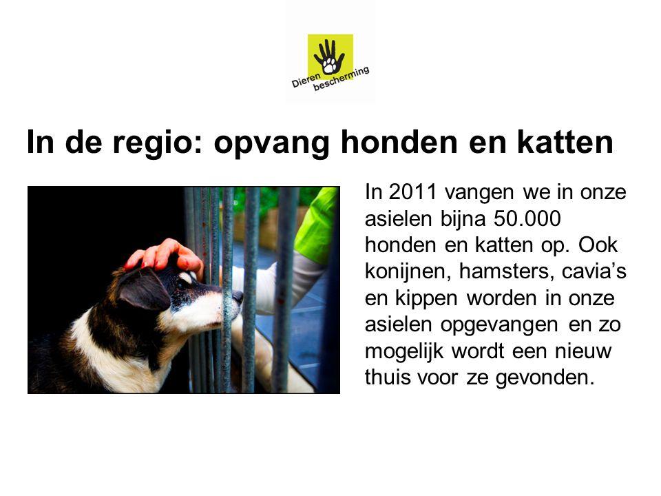 In de regio: opvang honden en katten In 2011 vangen we in onze asielen bijna 50.000 honden en katten op. Ook konijnen, hamsters, cavia's en kippen wor