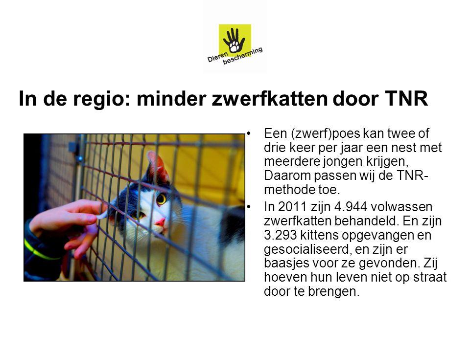 In de regio: minder zwerfkatten door TNR Een (zwerf)poes kan twee of drie keer per jaar een nest met meerdere jongen krijgen, Daarom passen wij de TNR