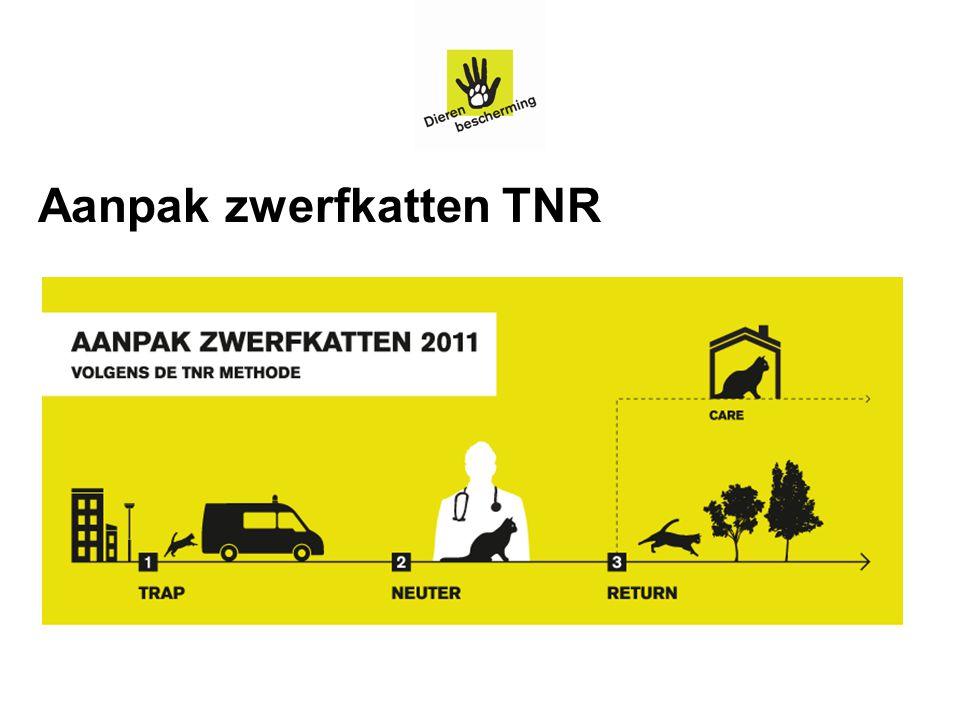 Aanpak zwerfkatten TNR