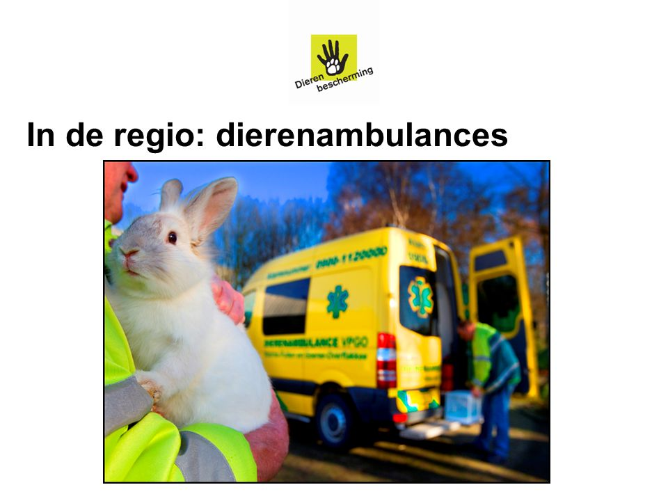 In de regio: dierenambulances