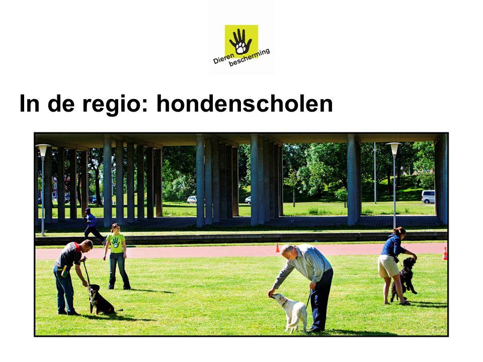 In de regio: hondenscholen