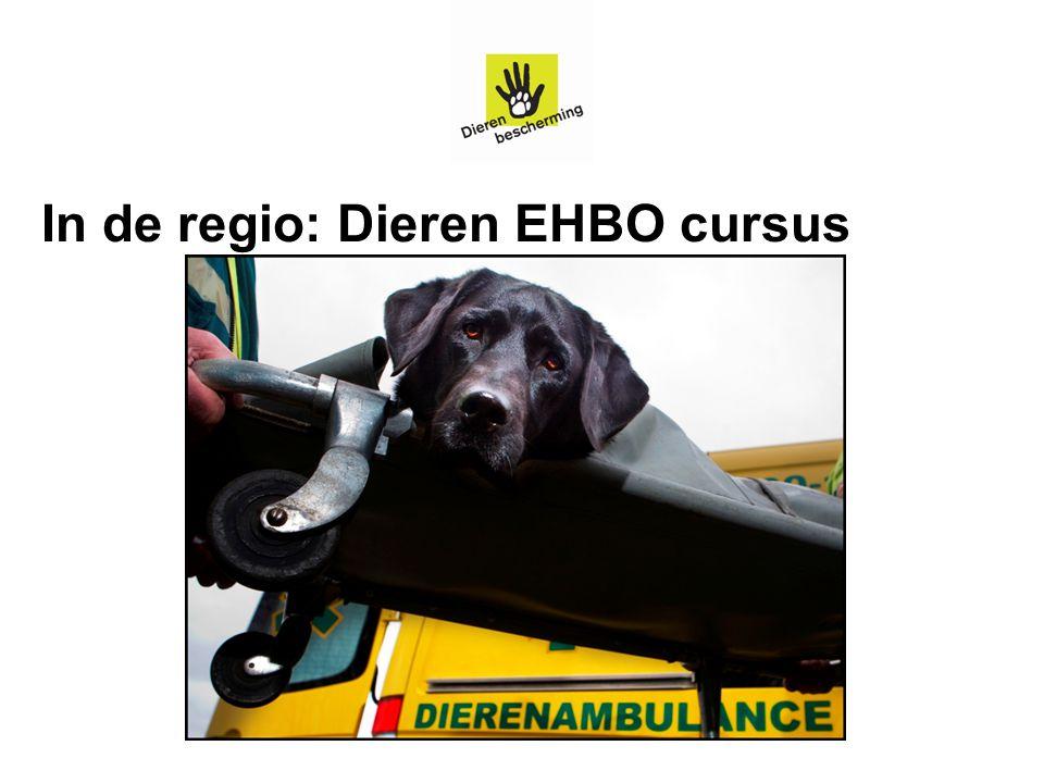 In de regio: Dieren EHBO cursus