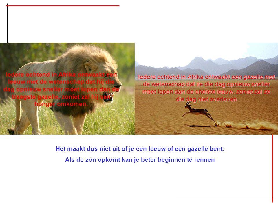 Iedere ochtend in Afrika ontwaakt een gazelle met de wetenschap dat ze die dag opnieuw sneller moet lopen dan de snelste leeuw, zoniet zal ze die dag