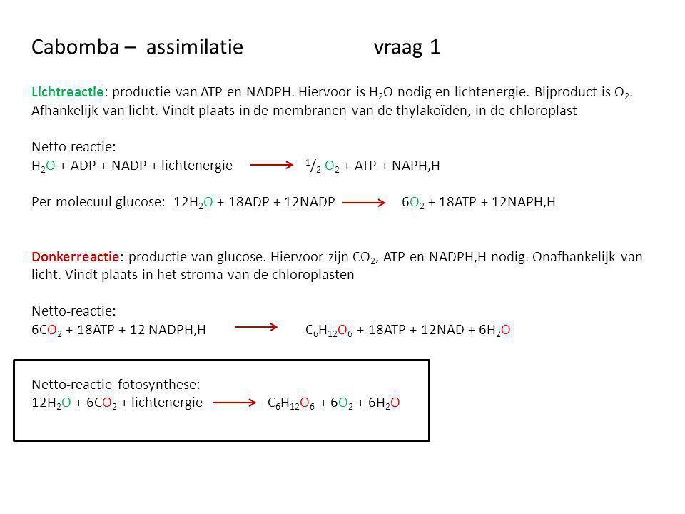 Cabomba – assimilatievraag 1 Lichtreactie: productie van ATP en NADPH. Hiervoor is H 2 O nodig en lichtenergie. Bijproduct is O 2. Afhankelijk van lic