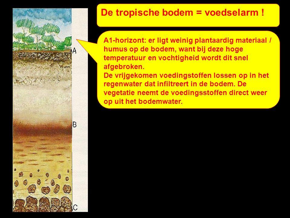 De tropische bodem = voedselarm .A2-horizont: UITspoelingshorizont.