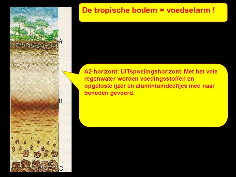 De tropische bodem = voedselarm .B-horizont: INspoelingshorizont.