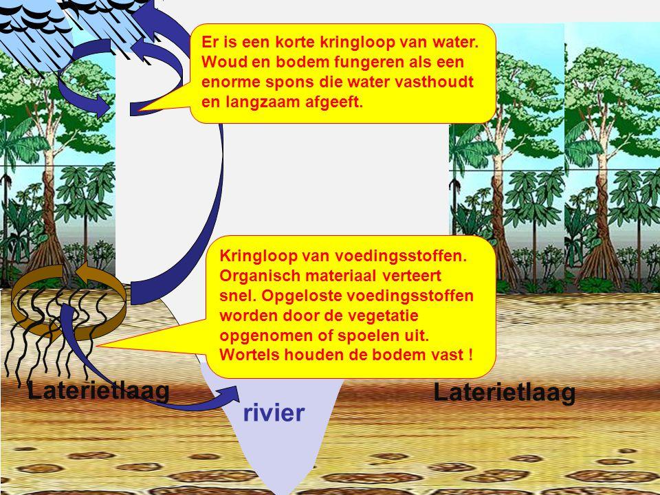 rivier Laterietlaag Het regenwoud wordt gekapt .