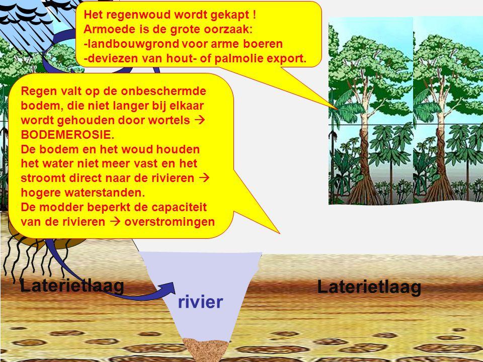 rivier Laterietlaag Het regenwoud is gekapt .Laterietlaag De kringloop van water is verbroken.