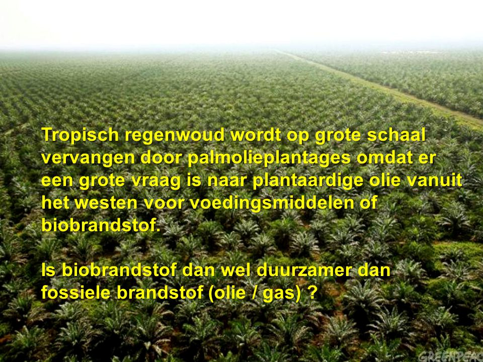 Tropisch regenwoud wordt op grote schaal vervangen door palmolieplantages omdat er een grote vraag is naar plantaardige olie vanuit het westen voor voedingsmiddelen of biobrandstof.