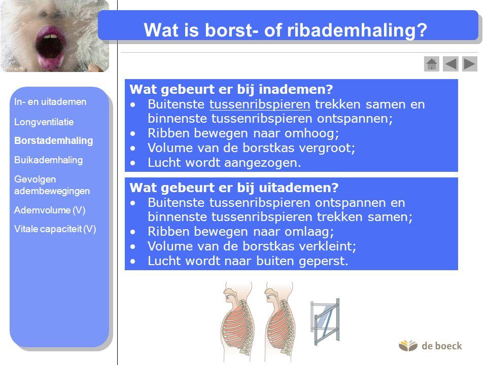 Wat is borst- of ribademhaling? Wat gebeurt er bij inademen? Buitenste tussenribspieren trekken samen en binnenste tussenribspieren ontspannen;Buitens