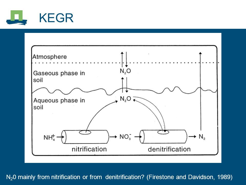 KEGR N 2 0 mainly from nitrification or from denitrification? (Firestone and Davidson, 1989)