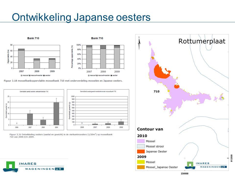 Ontwikkeling Japanse oesters
