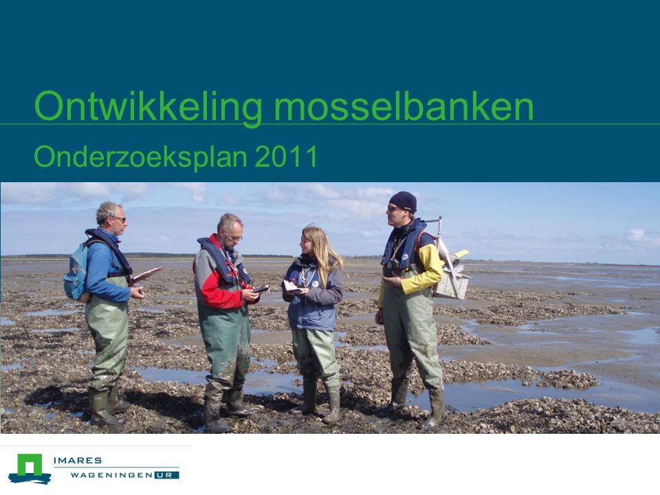 Ontwikkeling mosselbanken Onderzoeksplan 2011