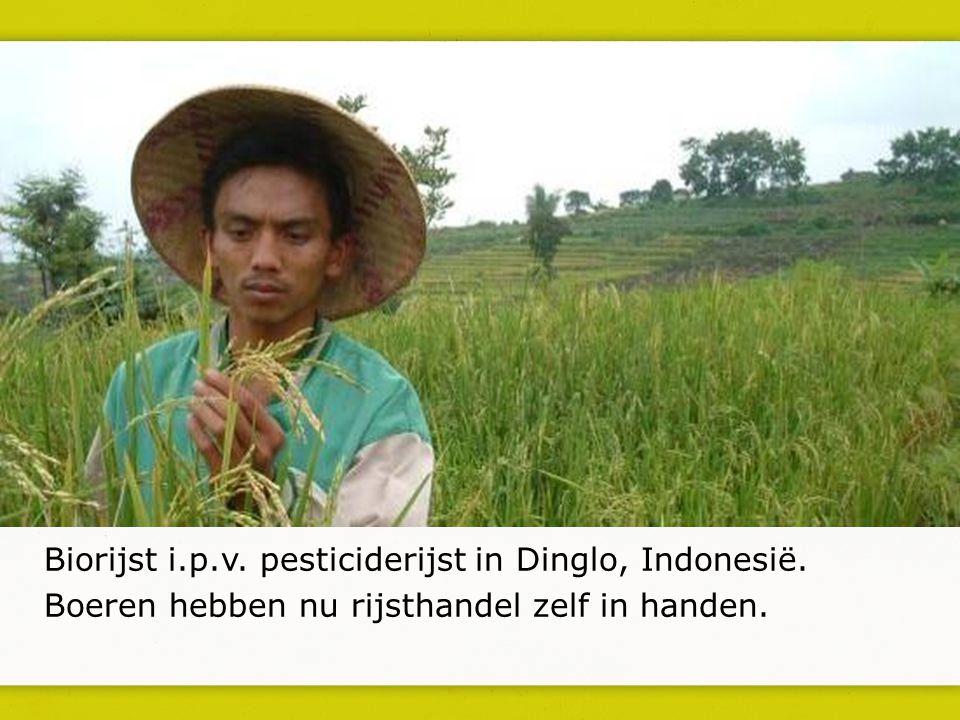 Biorijst i.p.v. pesticiderijst in Dinglo, Indonesië. Boeren hebben nu rijsthandel zelf in handen.