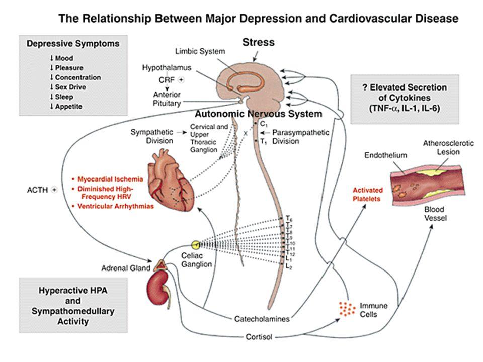 depressie en chronische lichamelijke ziekten Pathogenese van depressie en chronische lichamelijke ziekten HPA activatie Immune activatie PUFA's Plaatjes activatie DEPRESSIE STRESS CHRON.LICH.