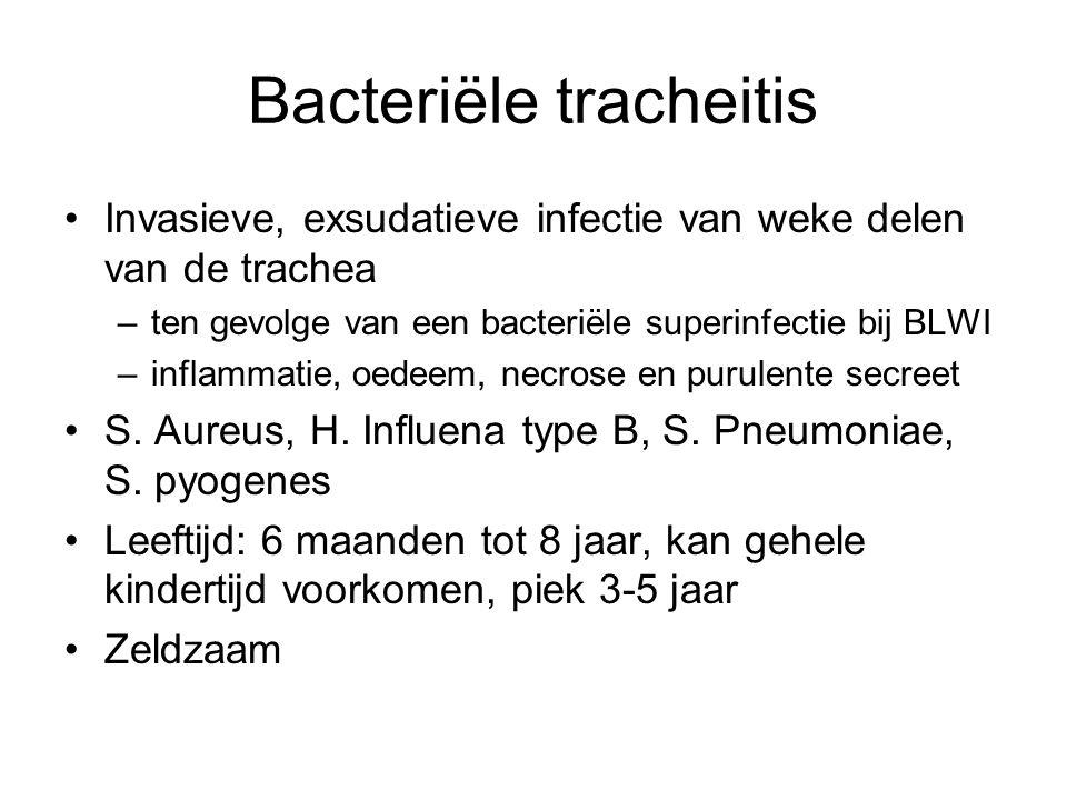 Bacteriële tracheitis Invasieve, exsudatieve infectie van weke delen van de trachea –ten gevolge van een bacteriële superinfectie bij BLWI –inflammati