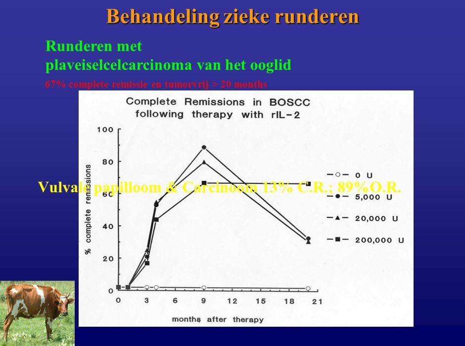 Behandeling zieke runderen 67% complete remissie en tumorvrij > 20 months Runderen met plaveiselcelcarcinoma van het ooglid Vulvale papilloom & Carcin