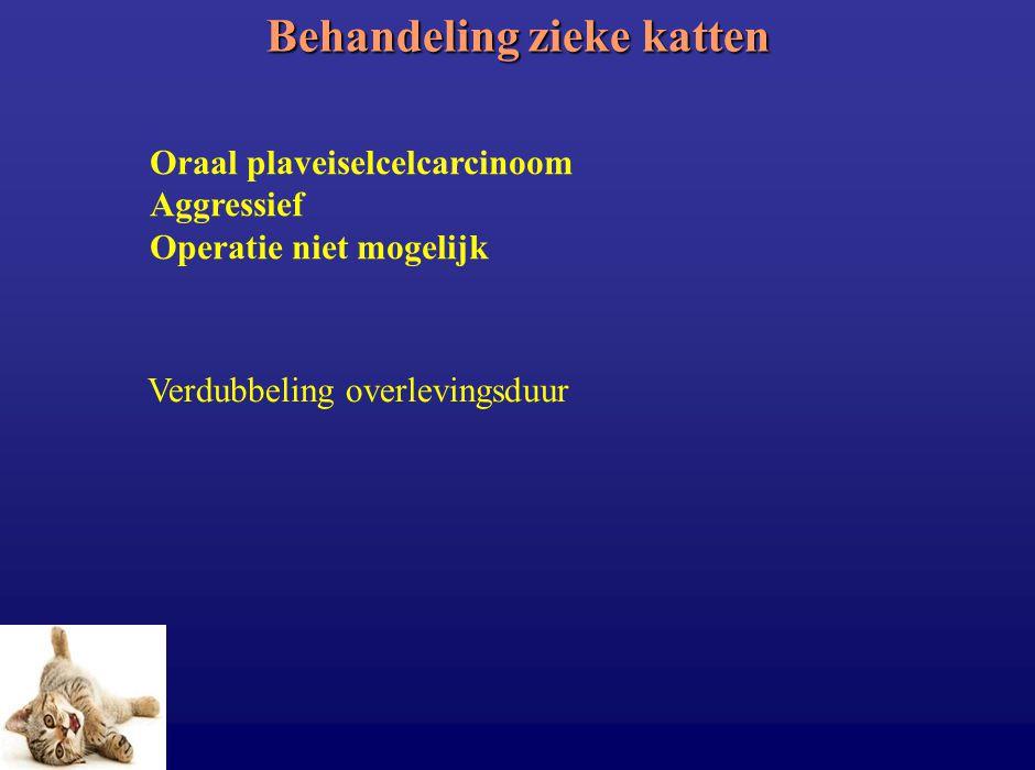 Behandeling zieke katten Oraal plaveiselcelcarcinoom Aggressief Operatie niet mogelijk Verdubbeling overlevingsduur