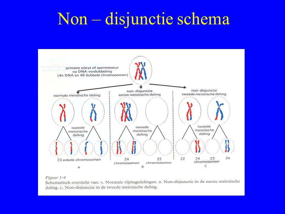 Non – disjunctie schema