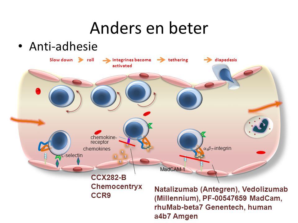 Anders en beter Anti-adhesie Slow downrollIntegrines become activated diapedesis L-selectin chemokines chemokine- receptor MadCAM-1  4  7 -integrin