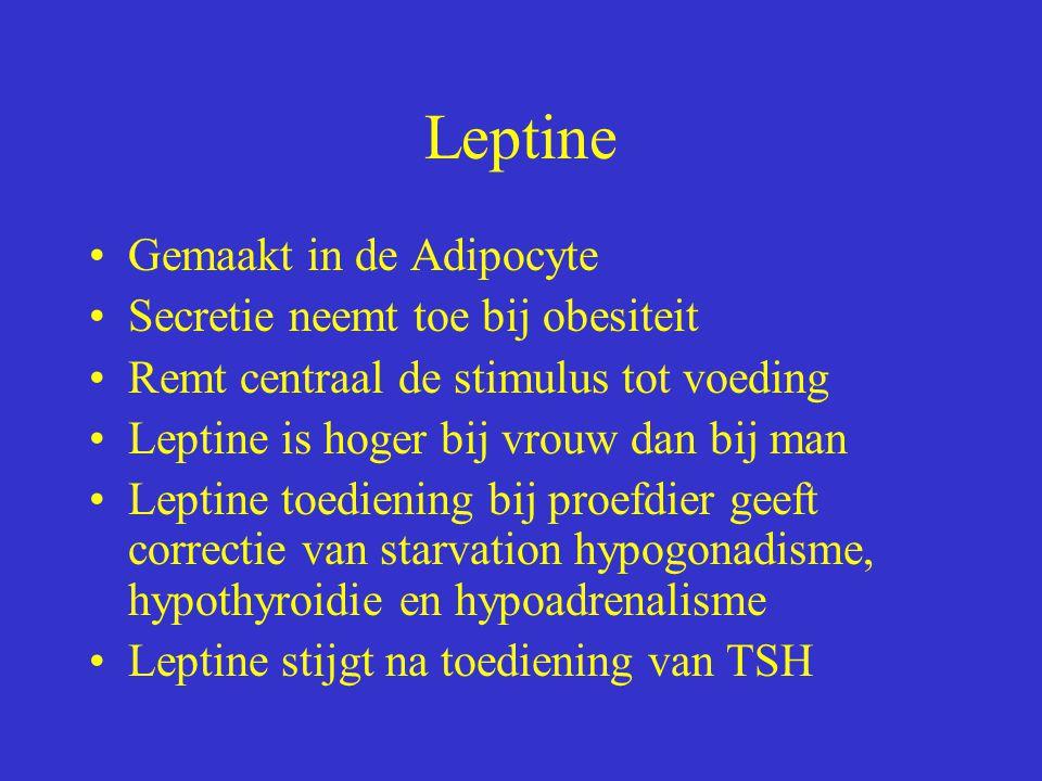Leptine Gemaakt in de Adipocyte Secretie neemt toe bij obesiteit Remt centraal de stimulus tot voeding Leptine is hoger bij vrouw dan bij man Leptine