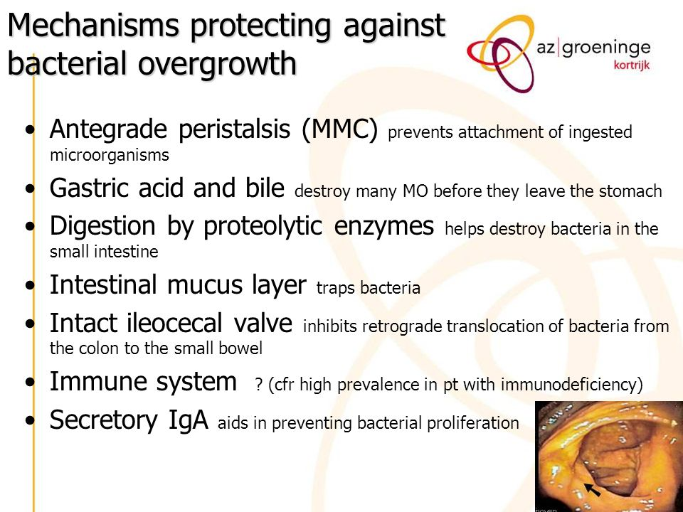 Mechanisms protecting against bacterial overgrowth Antegrade peristalsis (MMC) prevents attachment of ingested microorganisms Gastric acid and bile de