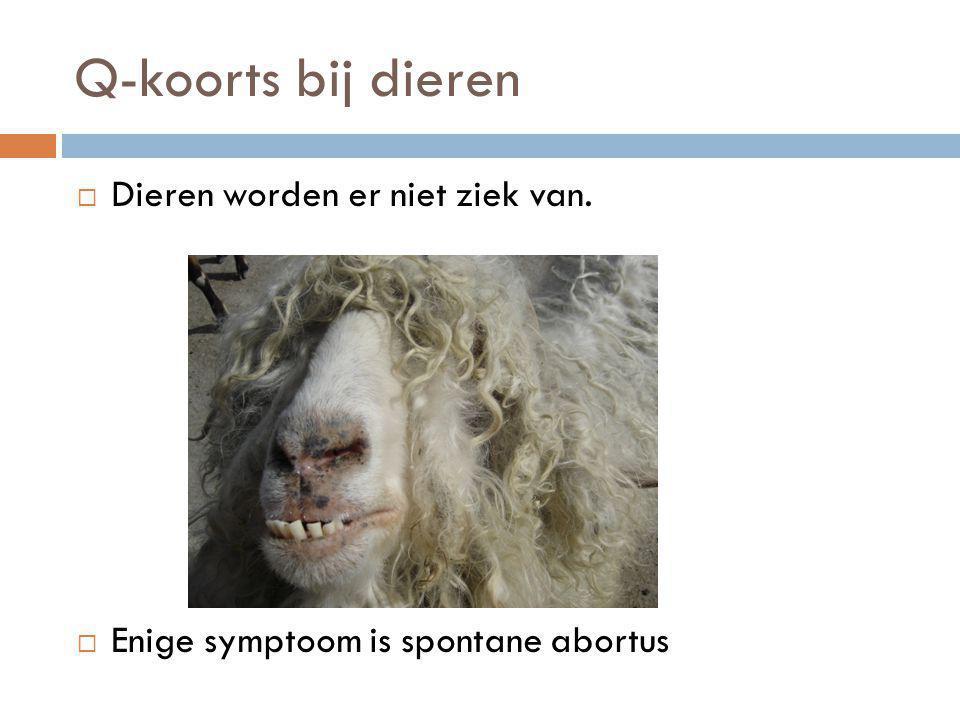 Q-koorts bij dieren  Dieren worden er niet ziek van.  Enige symptoom is spontane abortus