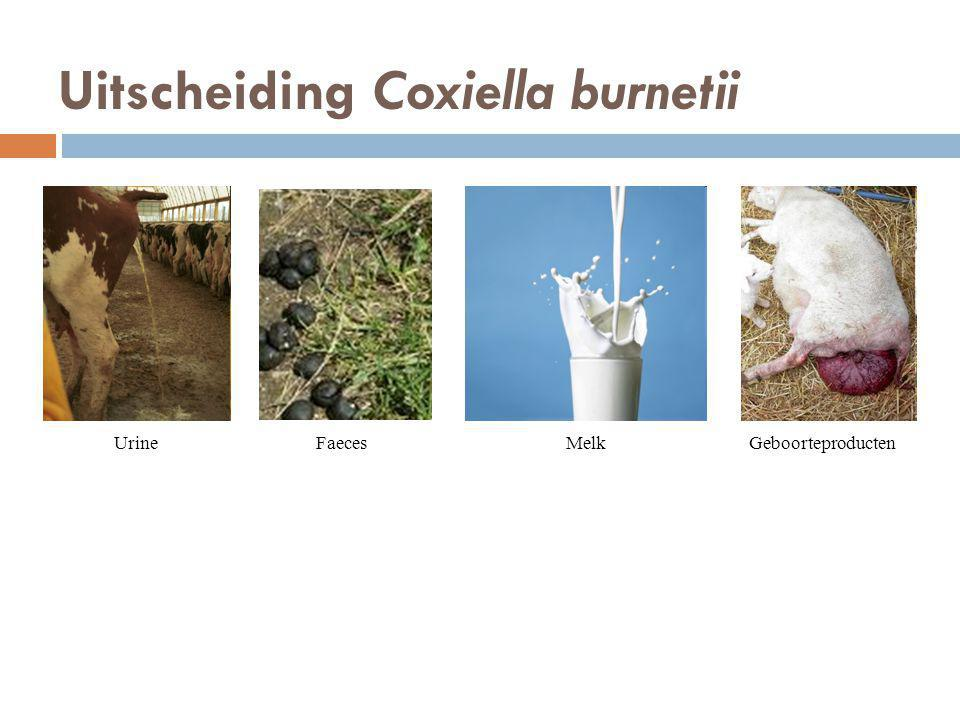 Uitscheiding Coxiella burnetii UrineFaecesMelkGeboorteproducten