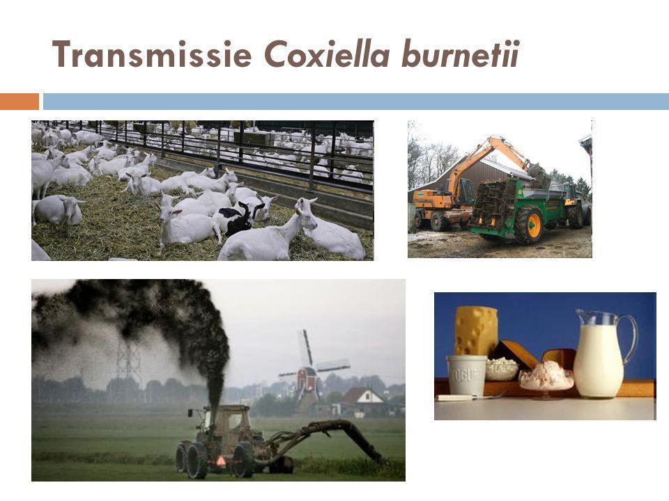 Besmetting van de mens  Besmetting van de mens gebeurt door inademing van besmette dierprodukten of door het drinken/eten van rauwe melk en melkprodukten.