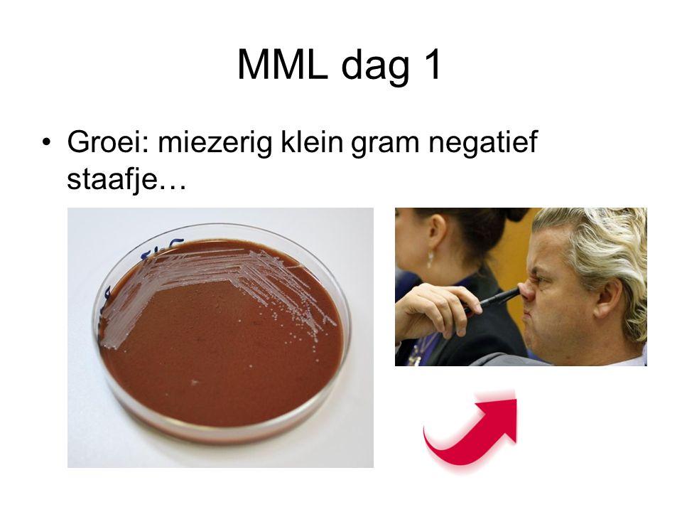 MML dag 1 Groei: miezerig klein gram negatief staafje…
