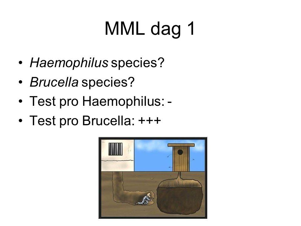 MML dag 1 Haemophilus species? Brucella species? Test pro Haemophilus: - Test pro Brucella: +++