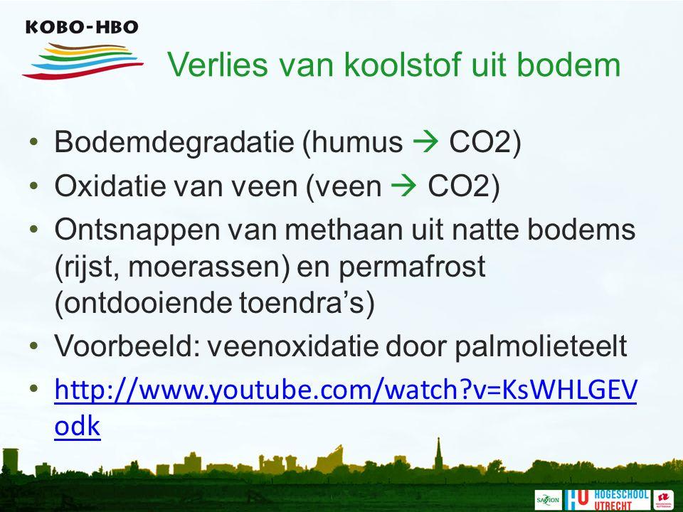 Verlies van koolstof uit bodem Bodemdegradatie (humus  CO2) Oxidatie van veen (veen  CO2) Ontsnappen van methaan uit natte bodems (rijst, moerassen) en permafrost (ontdooiende toendra's) Voorbeeld: veenoxidatie door palmolieteelt http://www.youtube.com/watch?v=KsWHLGEV odk http://www.youtube.com/watch?v=KsWHLGEV odk