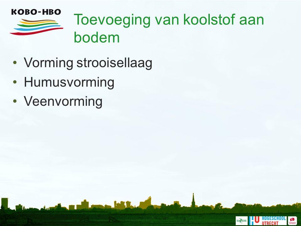 Toevoeging van koolstof aan bodem Vorming strooisellaag Humusvorming Veenvorming