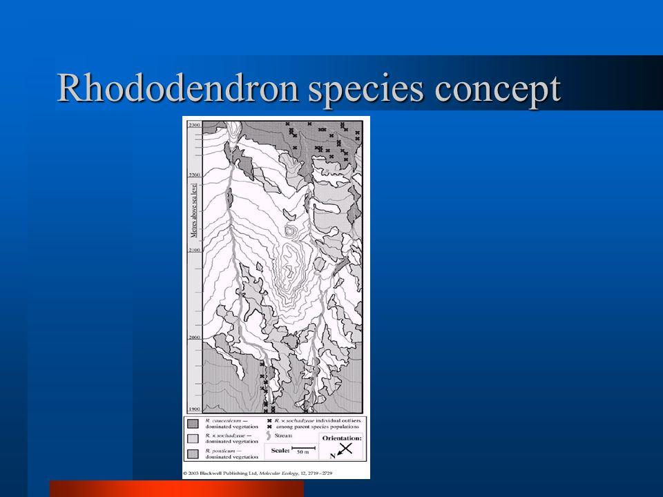 Rhododendron species concept