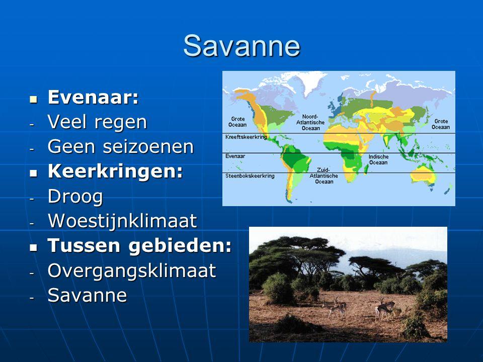 Savanne Evenaar: Evenaar: - Veel regen - Geen seizoenen Keerkringen: Keerkringen: - Droog - Woestijnklimaat Tussen gebieden: Tussen gebieden: - Overga
