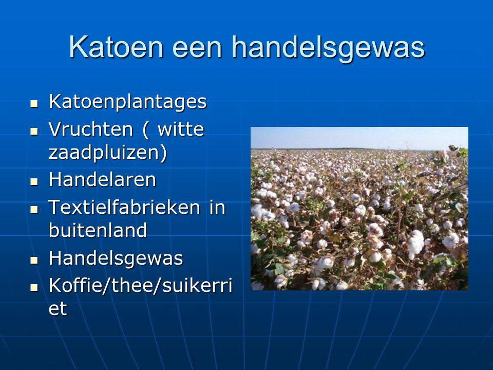 Katoen een handelsgewas Katoenplantages Katoenplantages Vruchten ( witte zaadpluizen) Vruchten ( witte zaadpluizen) Handelaren Handelaren Textielfabri