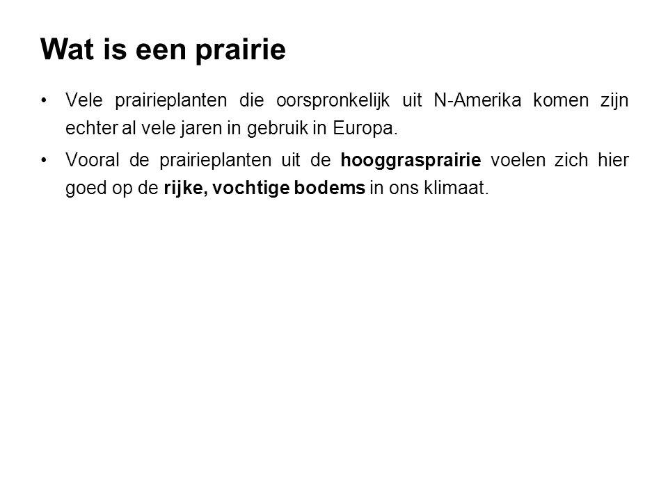 Wat is een prairie Vele prairieplanten die oorspronkelijk uit N-Amerika komen zijn echter al vele jaren in gebruik in Europa. Vooral de prairieplanten