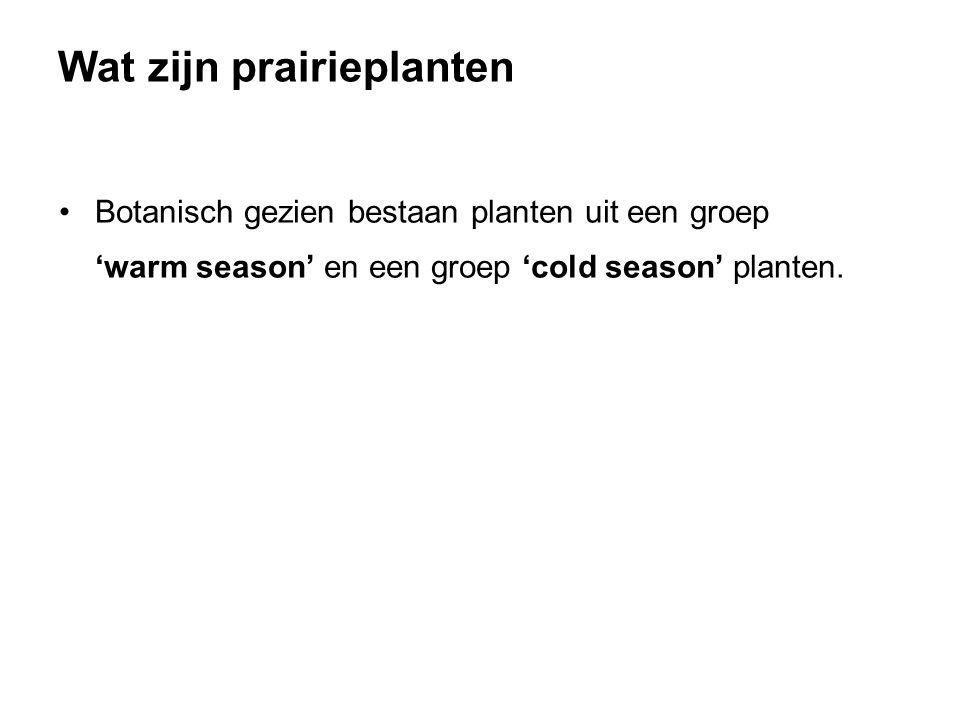 Botanisch gezien bestaan planten uit een groep 'warm season' en een groep 'cold season' planten. Wat zijn prairieplanten