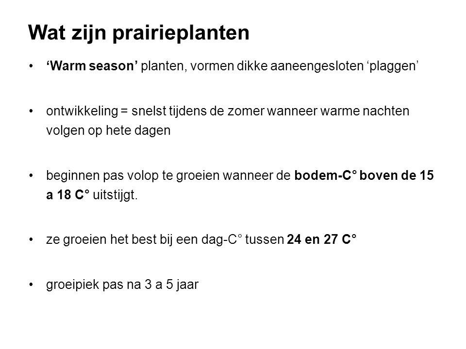 'Warm season' planten, vormen dikke aaneengesloten 'plaggen' ontwikkeling = snelst tijdens de zomer wanneer warme nachten volgen op hete dagen beginne