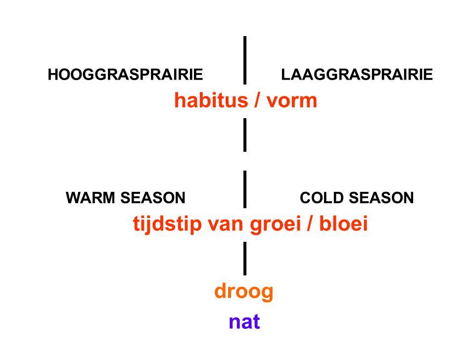 HOOGGRASPRAIRIELAAGGRASPRAIRIE WARM SEASONCOLD SEASON habitus / vorm tijdstip van groei / bloei droog nat