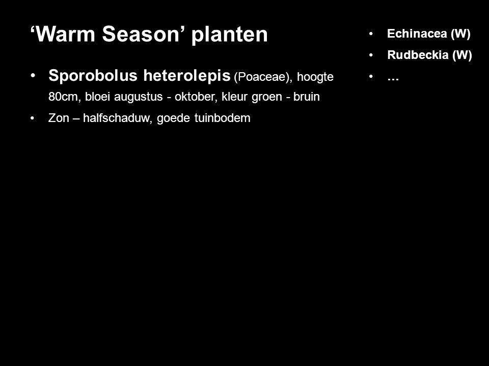 Sporobolus heterolepis (Poaceae), hoogte 80cm, bloei augustus - oktober, kleur groen - bruin Zon – halfschaduw, goede tuinbodem 'Warm Season' planten Echinacea (W) Rudbeckia (W) …