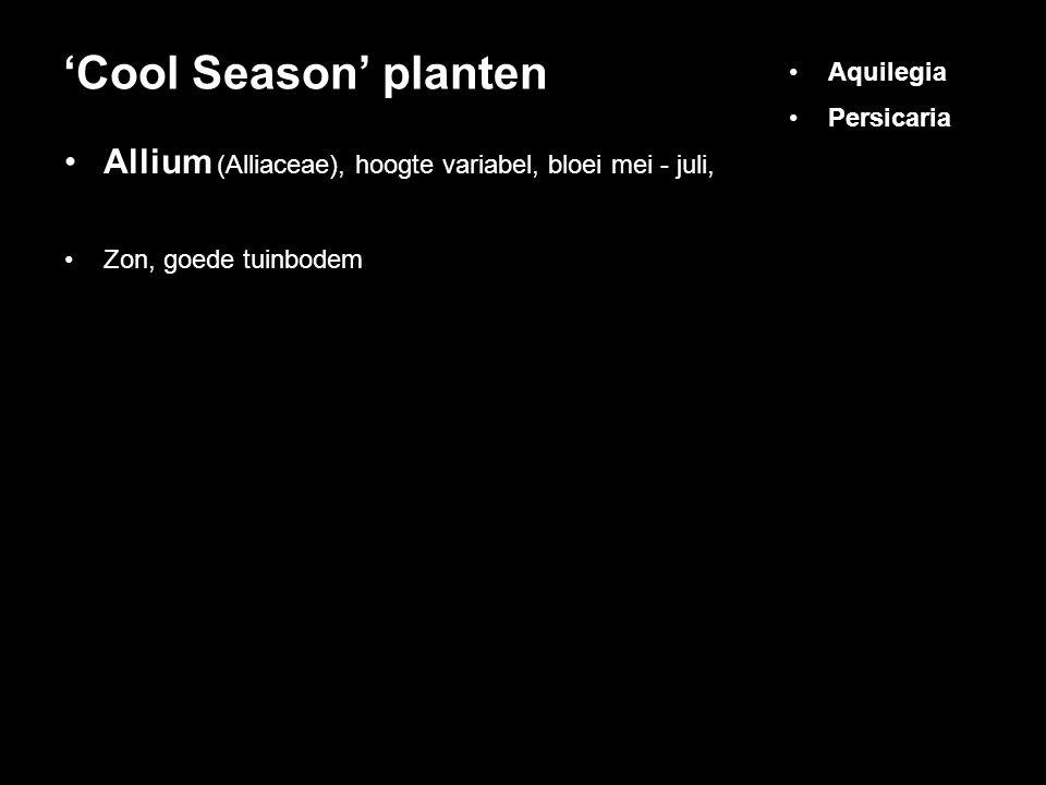 Allium (Alliaceae), hoogte variabel, bloei mei - juli, Zon, goede tuinbodem 'Cool Season' planten Aquilegia Persicaria