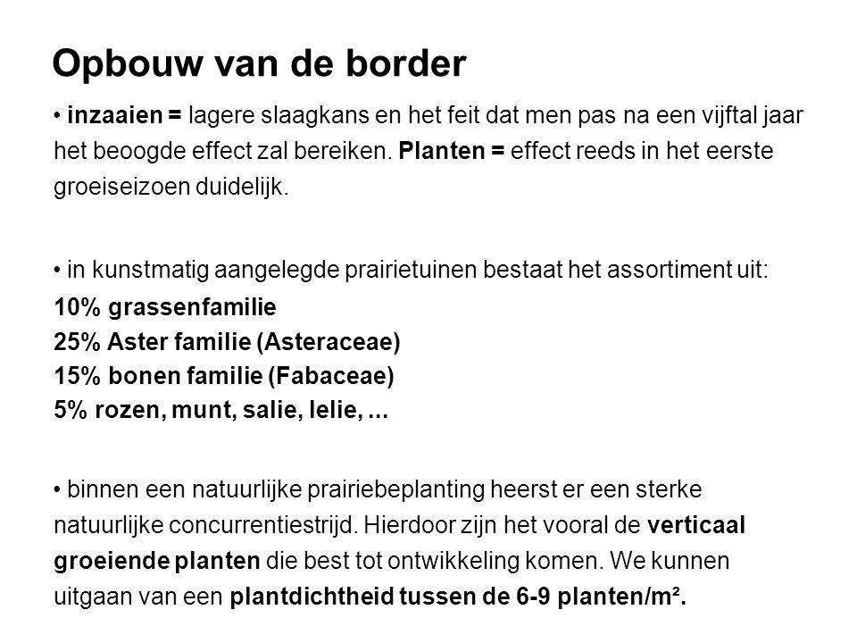 Opbouw van de border inzaaien = lagere slaagkans en het feit dat men pas na een vijftal jaar het beoogde effect zal bereiken. Planten = effect reeds i