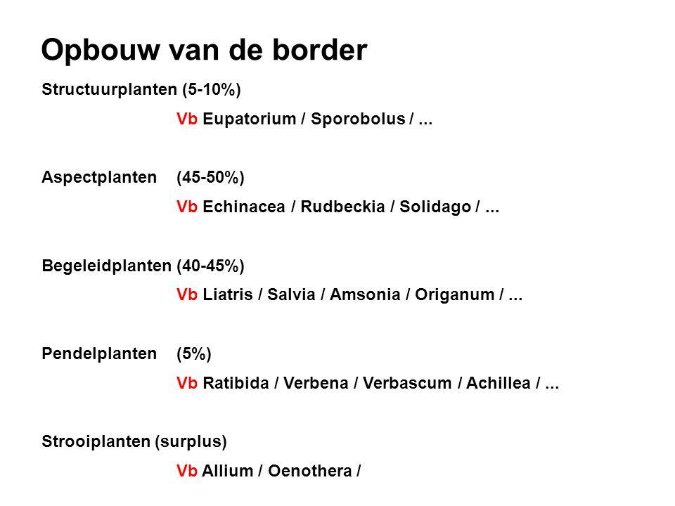 Structuurplanten (5-10%) Vb Eupatorium / Sporobolus /... Aspectplanten(45-50%) Vb Echinacea / Rudbeckia / Solidago /... Begeleidplanten (40-45%) Vb Li