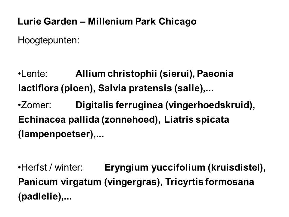 Lurie Garden – Millenium Park Chicago Hoogtepunten: Lente:Allium christophii (sierui), Paeonia lactiflora (pioen), Salvia pratensis (salie),... Zomer: