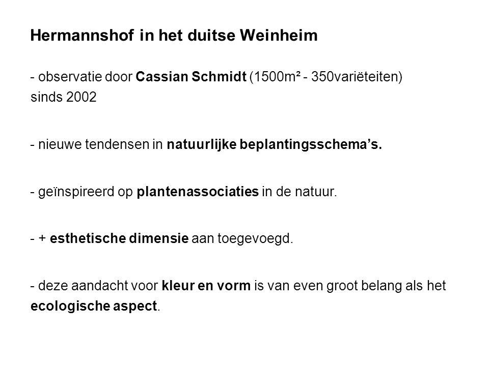 Hermannshof in het duitse Weinheim - observatie door Cassian Schmidt (1500m² - 350variëteiten) sinds 2002 - nieuwe tendensen in natuurlijke beplanting